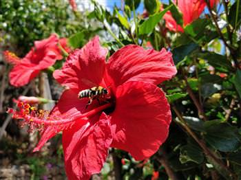 Garden Calhau Grande Accommodation Rural Tourism